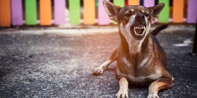 rabia en los perros