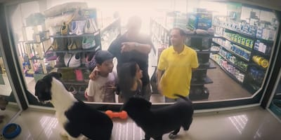 Przyszli kupić psa do sklepu. Jego cena ich zszokowała! (VIDEO)