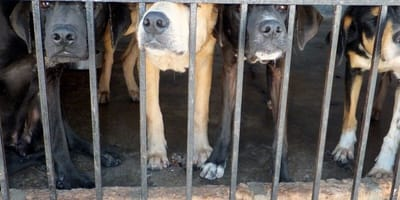 Dogs given reprieve as meat market closes in South Korea
