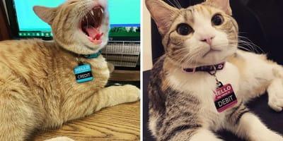 gatos crédito y débito