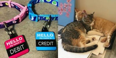 Office kittens Debit & Credit