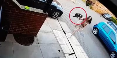 Weil Katze nervt: Frau entpuppt sich als höllische Nachbarin