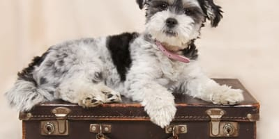 Dogs are given to pounds by owners who go on holiday