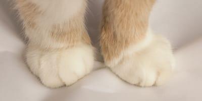 Was steckt hinter dem Milchtritt bei Katzen?