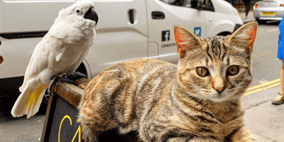 This cat is getting ready to bring joy and laughter to London's miserable people.