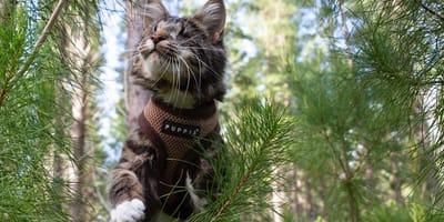 Blinde Katze – mit diesen Tipps hat sie dennoch Freude am Leben