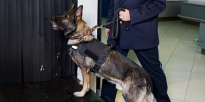 Man at airport is cornered by police dog after comitting horrendous crime