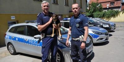 Chłopiec, który stracił w wypadku matkę i siostrę tęskni za psem. Policjanci z Lubina ruszają z pomocą