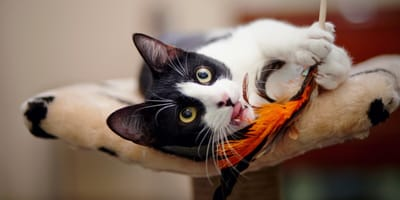 Katze spielt auf Kratzbaum