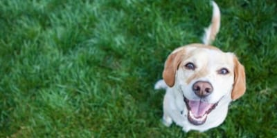 Dog sits and smiles at camera