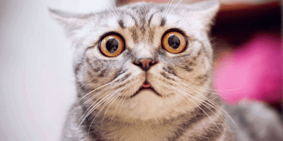 Deficit propioceptivo en gatos