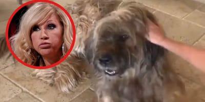 Carmen Geiss: Nach Tierquälerei kommt es knallhart für die Millionärs-Blondine!