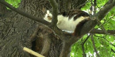 Kot_na_drzewie