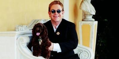 Nie żyje Arthur, ukochany spaniel Eltona Johna - wielkiego miłośnika zwierząt