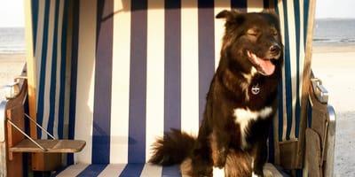 Reiseziel Ostfriesland: Wo Hunde sich pudelwohl fühlen