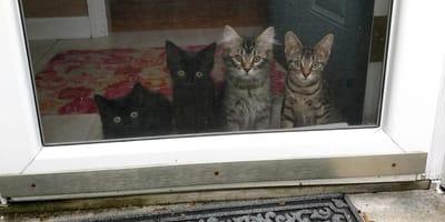 Katzen in Pflege