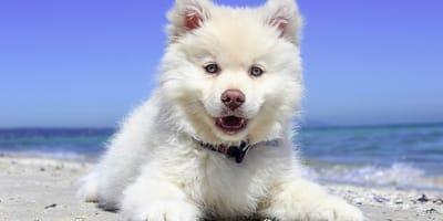 cane-al-mare-tra-le-onde