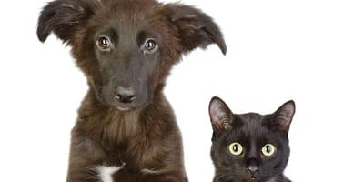 mascotas negras abandonadas