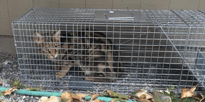 gatito apariencia inofensiva atemoriza gente