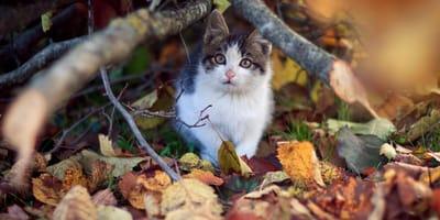 Atraer a gato perdido