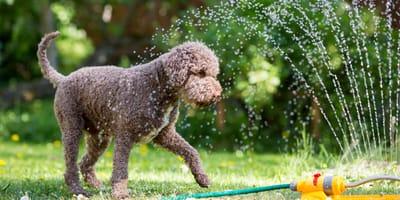 Hund und Thermometer