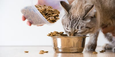 Jak często należy karmić kota?