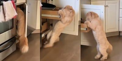 gato abriendo cajon cocina