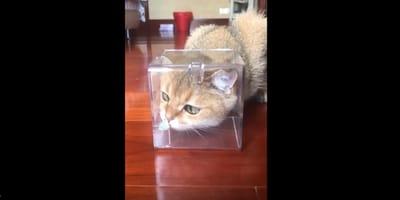 Gato y mariposa video
