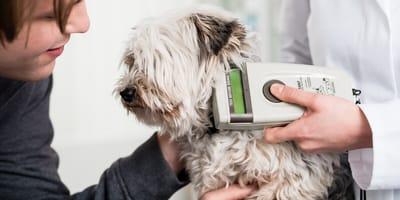 Diagnose Diabetes: Was Hundehalter wissen müssen