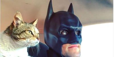 batman con gattino salvato