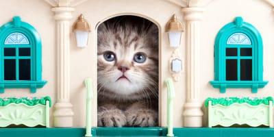 adaptar mi casa a un gato