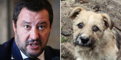 100 Hunde von Flüchtlingen: Salvinis Plan sorgt für Aufregung