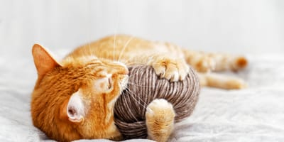 ¡No las dejes a su alcance! Estas 6 cosas que todos tenemos en casa podrían matar a tu gato