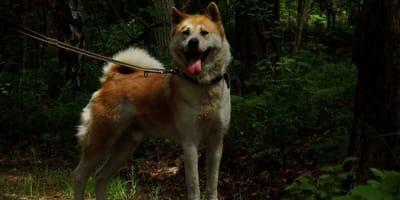 cane-al-guinzaglio-nella-foresta