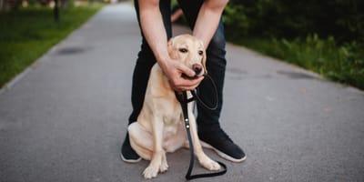 Symptome, wenn ein Hund Rattengift verschluckt hat