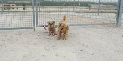 due cani abbandonati davanti a un canile