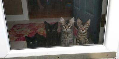 4_kociaki_patrza_przez_drzwi