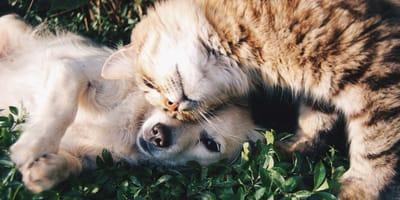 cane e gatto vicini