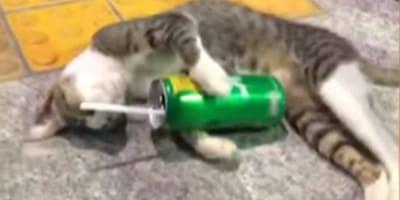 """Kot, który """"upił się"""" lemoniadą rozbawi cię do łez (VIDEO)"""