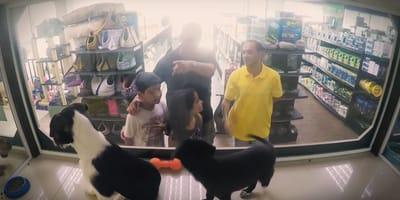Sie wollen einen Hund kaufen: Als sie den Preis hören, fallen sie aus allen Wolken!