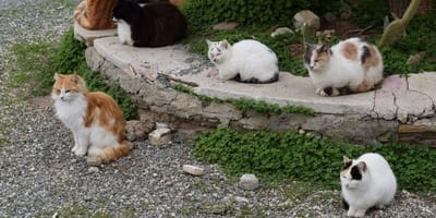 Cat overpopulation is a huge problem in Doncaster