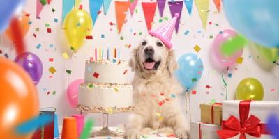Dia internacional del perro fiesta