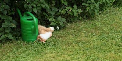 Frau findet statt Katze Schlange im Garten
