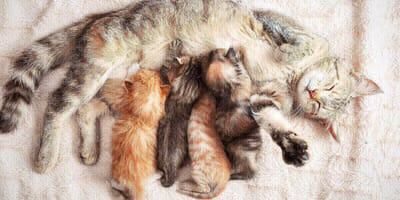 Wurfkiste für Katzen: Das erste Zuhause für Katzenbabys