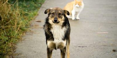cane e gatto in strada