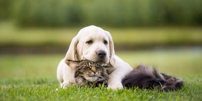 Süßer Hund und süße Katze