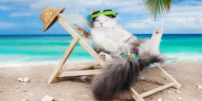 ¿Cómo saber si tu gato sufre un golpe de calor?  Te contamos cómo prevenirlo
