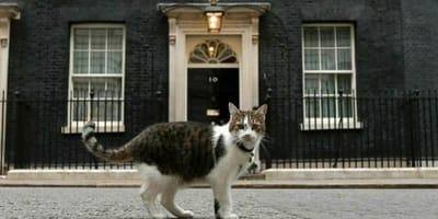 gatto in primo piano in strada