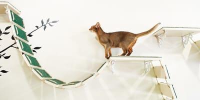 Katzenkletterwand: Ein Abenteuerspielplatz für den Stubentiger