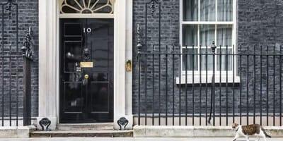 Boris Johnson, nowy premier Wielkiej Brytanii zamieszka z kotem Larrym